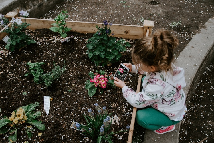 Podemos aprender com as plantas